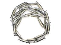 Metal Wall Art - Fish Shoal Swirl